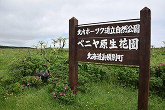 ベニヤ原生花園